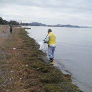 淡海エコフォスター活動 11月